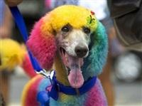 Собачий карнавал, Фото: 7