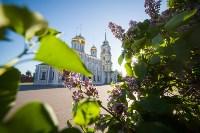 Яблони у кремля, Фото: 10