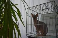 Выставка кошек в ГКЗ. 26 марта 2016 года, Фото: 10