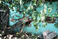 В Барсуках фура влетела в огород и сломала дерево, Фото: 5
