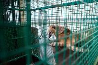 Цирк Гии Эрадзе в Туле, Фото: 16
