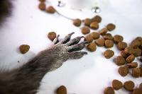 Тульское Шоу ручных енотов: «Из-за карантина нам нужна помощь туляков», Фото: 38