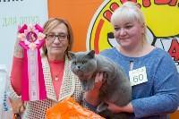 Выставка кошек в Туле, Фото: 63
