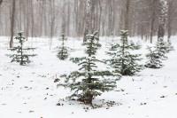 Мартовский снег в Туле, Фото: 75
