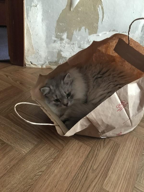 Кот Пряник