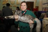 Выставка кошек. 21.12.2014, Фото: 9