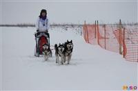 Куликово поле. Гонки на собачьих упряжках., Фото: 114