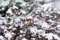 Мартовский снег в Туле, Фото: 120