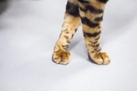 Выставка кошек в МАКСИ, Фото: 74