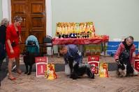 """Выставки собак в ДК """"Косогорец"""", Фото: 41"""