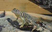 Ящерицы в Тульском экзотариуме, Фото: 5