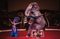 «Шоу Слонов» в Тульском цирке, Фото: 24