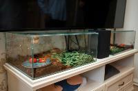 Экзотические животные в квартире, Фото: 58
