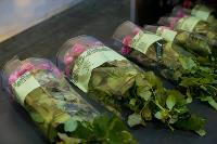 Миллион разных роз: как устроена цветочная теплица, Фото: 56
