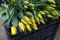 Тюльпаны , Фото: 12