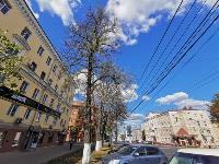 В Туле гибнут деревья, Фото: 39