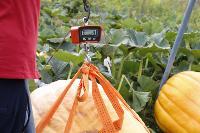 Гигантские тыквы из урожая семьи Колтыковых, Фото: 31
