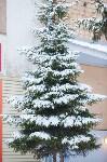 Тула после снегопада. 23.12.2014, Фото: 49