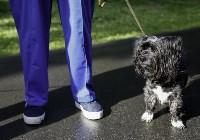 Рейд по выгулу собак в Центральном парке, Фото: 6