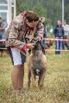 Международная выставка собак, Барсучок. 5.09.2015, Фото: 25