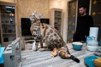 Экзотические животные в квартире, Фото: 59