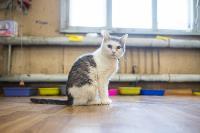 Волонтеры спасли кошек из адской квартиры, Фото: 82