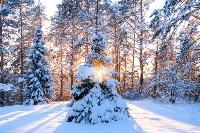 Снежное Поленово, Фото: 72