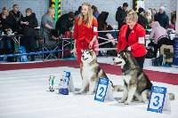 Выставка собак в Туле, Фото: 102
