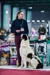 Выставка собак в Туле, Фото: 98
