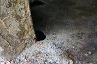 С заброшенных очистных канализация много лет сливается под заборы домов, Фото: 40