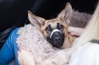 Спасение рядового пса, Фото: 8