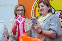 Выставка кошек в Туле, Фото: 69