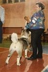 В Туле прошла всероссийская выставка собак, Фото: 11