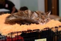 Выставка кошек в Туле, Фото: 2