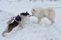 Праздник северных собак на Куликовом поле , Фото: 31