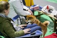Выставка собак в Туле 14.04.19, Фото: 44