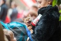 Выставка кошек в МАКСИ, Фото: 43