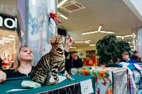 """Выставка """"Пряничные кошки"""" в ТРЦ """"Макси"""", Фото: 60"""