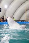 Дельфинарий в Туле, Фото: 25