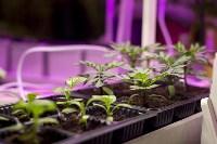 Леруа Мерлен: Какие выбрать семена и правильно ухаживать за рассадой?, Фото: 13