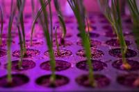 Леруа Мерлен: Какие выбрать семена и правильно ухаживать за рассадой?, Фото: 9