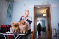 Выставка собак в Туле, 29.11.2015, Фото: 17
