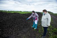 В Тульской области Богородицкий район атаковали мошки, Фото: 13