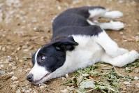 Собаки на тульской метеостанции, Фото: 8