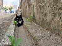 Тульские котики, Фото: 27