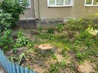 вырубка деревьев во дворе дома №33 по ул. Горького в Туле, Фото: 5