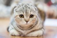 В Туле прошла выставка «Пряничные кошки» , Фото: 104