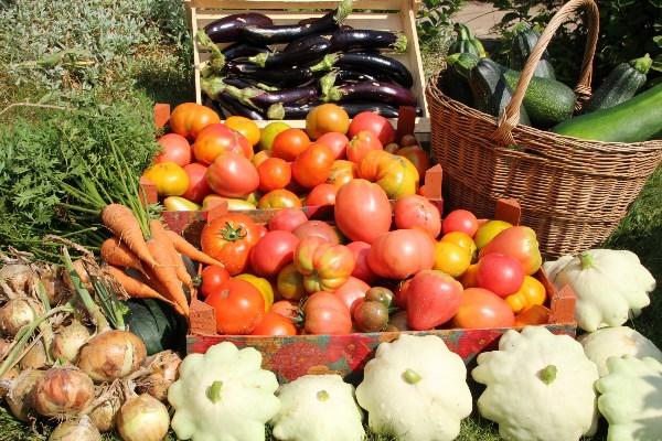 Люблю помидоры разные:черные, желтые, красные...(а еще розовые, малиновые, зеленоплодные)