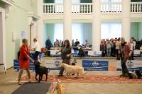 """Выставки собак в ДК """"Косогорец"""", Фото: 37"""