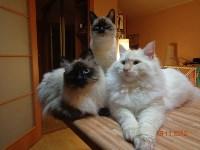 Пристроенные домашние животные, Фото: 7